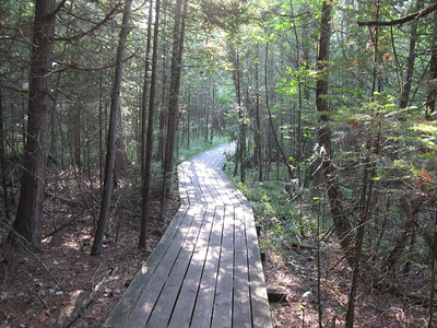 Boardwalk trail at Grass River Natural Area