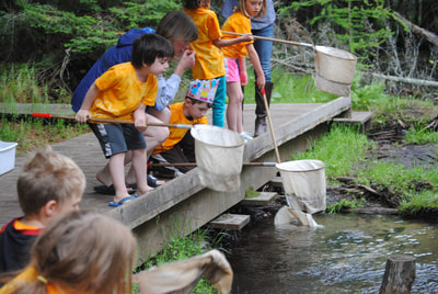Dipping nets into Finch Creek to see what you find